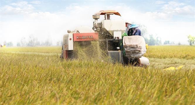 Công ty CP Nông sản Vinacam - Làm gạo sạch thâm nhập thị trường khó tính
