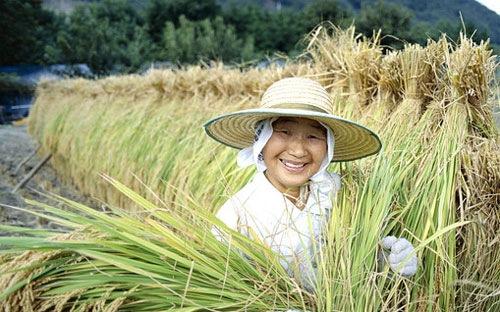 Nông nghiệp là một ngành được bảo hộ chặt chẽ ở Nhật