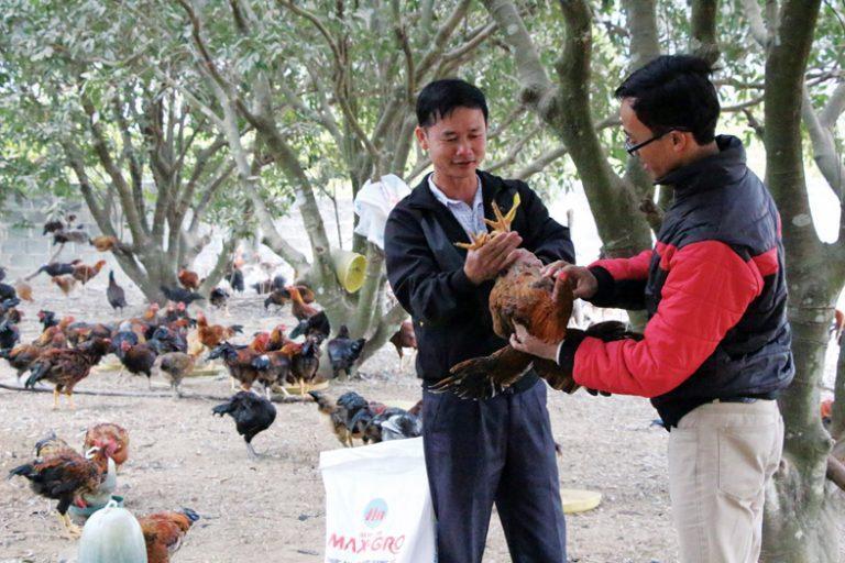 Anh Lục Văn Nhàn (bên trái) cùng nhân viên công ty Hồng Hà kiểm tra sinh trưởng của gà