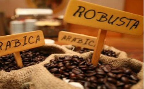 ICO hỗ trợ cho giá cà phê robusta từ Brazil trước tình trạng hạn hán ở Việt Nam